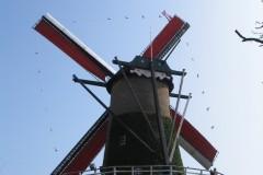 Molendag Terheyden 27 maart 2011