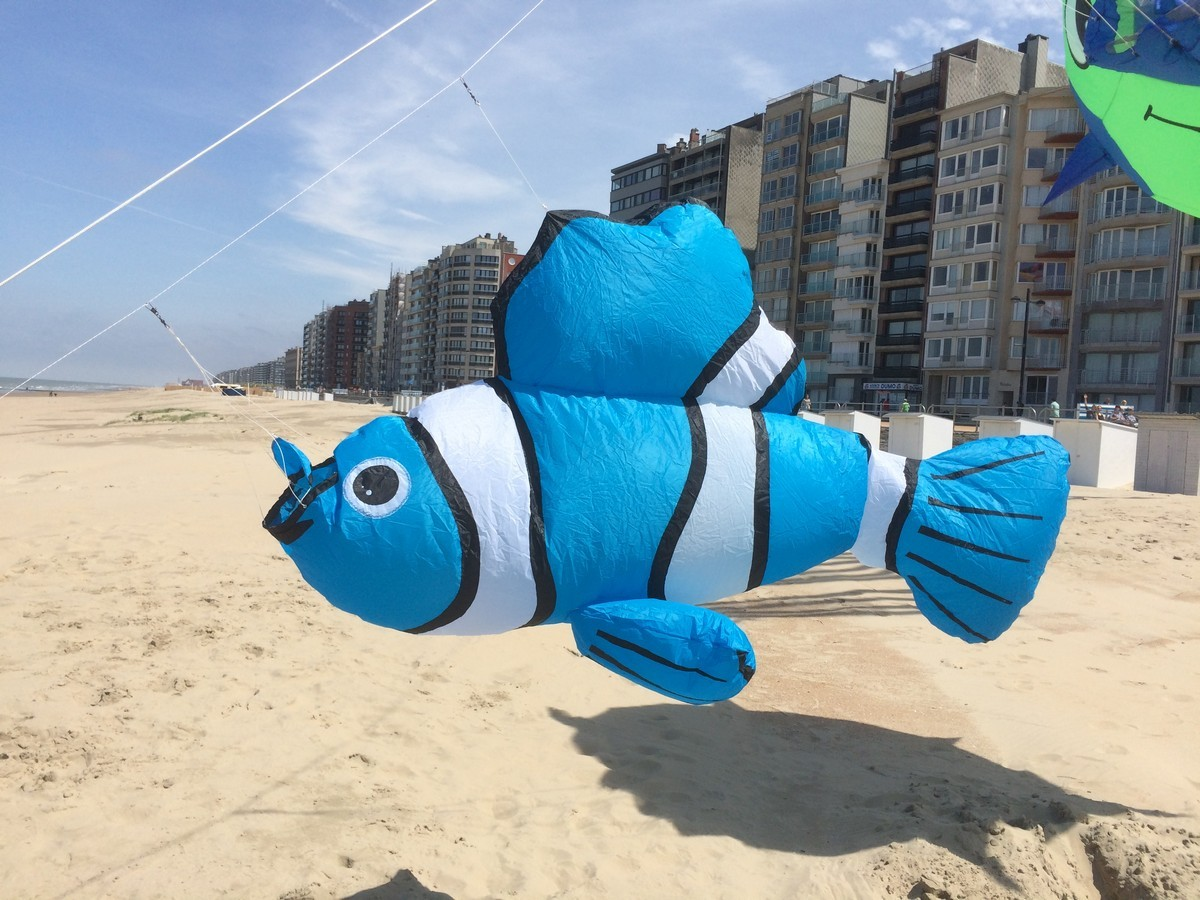 Nemo blauw