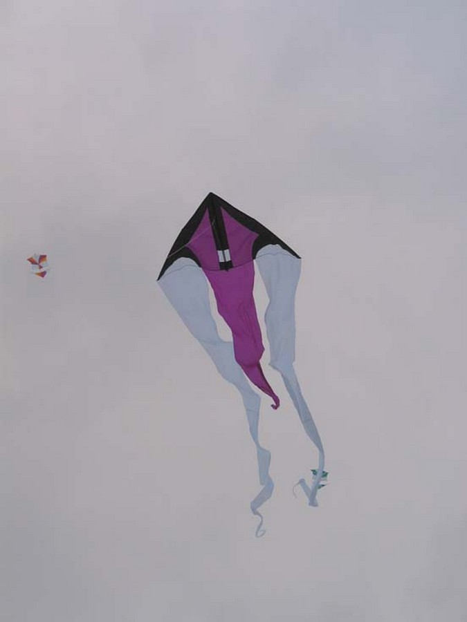 Schleierdelta paars