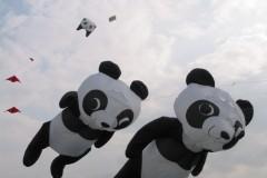 Panda beren